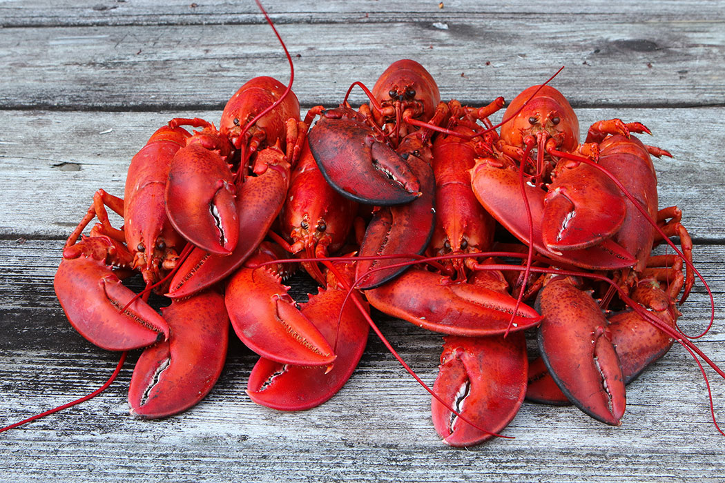 A pile of lobsters representing seafood exported from Atlantic Canada